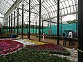 Snap from Lalbagh Flower Show Aug 2013 7872.JPG