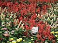 Snap from Lalbagh Flower Show Aug 2013 8405.JPG