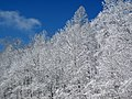 Snow from Winter Storm Skylar (12 March 2018) (near Frenchburg, Menifee County, Kentucky, USA) 12.jpg