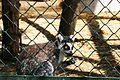 Sofia Zoo E9.jpg