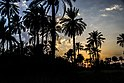 Sothern Palm Sunset.jpg