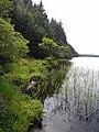 South shore of Lough Meenameen - geograph.org.uk - 1391208.jpg