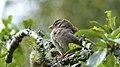Sparrow (10100440905).jpg