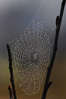Dew water in the form of droplets that appears on thin, exposed objects in the morning or evening