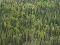Spring Aspen-Birch-Pine-Doug Fir Forest (3559696797).jpg