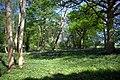 Spring Woodland - geograph.org.uk - 421425.jpg