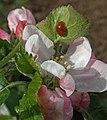 Spring at Silk Weavers Way (26757066302).jpg