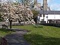 Spring blossom - geograph.org.uk - 1484836.jpg