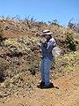 Starr-110727-8038-Bidens pilosa-habitat with Forest looking for Trupanea crassipes-Polipoli-Maui (25075760726).jpg