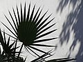 Still Life with Plant and Shadow - Girne (Kyrenia) - Turkish Republic of Northern Cyprus (28348311600).jpg