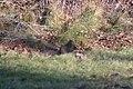 Stirling Squirrels 0003 (4099174788).jpg