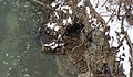 Stormwater drain main branch Euclid Heritage Park - Euclid Creek Reservation.jpg