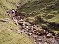 Stream in Upper Coverdale - geograph.org.uk - 223960.jpg