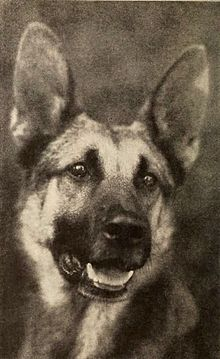 Strongheart - Dec 1921 Photoplay.jpg