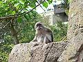Suisse zoo (20).jpg