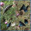 Swallowtail City (2650034685).jpg