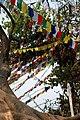 Swayambunathflags.jpg
