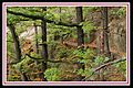 Szlak do Starego Zamku - panoramio.jpg