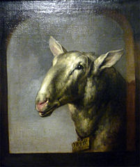 Head of a Sheep