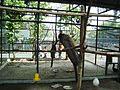 Taman Hewan Pematang Siantar (27).JPG