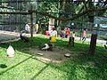 Taman Hewan Pematang Siantar (28).JPG