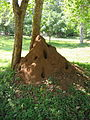 Termitenhügel2.jpg