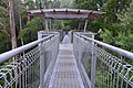 The 30m high structure of The Treetop Walk (19199401288).jpg