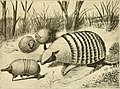 The American natural history - a foundation of useful knowledge of the higher animals of North America (1914) (14803919373).jpg