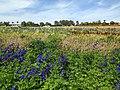 The Flower Fields at Carlsbad Ranch 101 2014-04-28.jpg