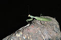 The Gambia has many kinds of insects.jpg
