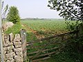 The Macmillan Way above Hampnett - geograph.org.uk - 447634.jpg