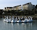 The Pickie swans, Bangor - geograph.org.uk - 1239436.jpg