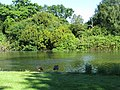 The lake from the garden of Osterley House - geograph.org.uk - 1919701.jpg