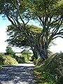 The lane to Langford Barton - geograph.org.uk - 228616.jpg