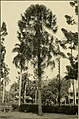 The ornamental trees of Hawaii (1917) (14765936225).jpg