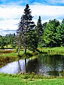 The pond of remembering - panoramio.jpg