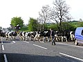 The rush hour on the A5 - geograph.org.uk - 168153.jpg