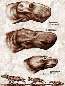 Theriodont taxon of mammals (fossil)
