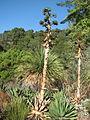 Tilden botanical garden 1.JPG