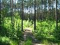 Tomsky District, Tomsk Oblast, Russia - panoramio (86).jpg