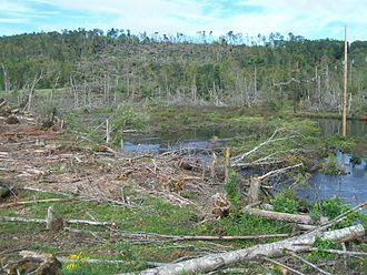 2011 New England tornado outbreak - Tree damage in Sturbridge