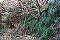 Traces of Toriuchi village in Hachijo-Kojima Island 02.jpg