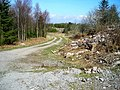 Track in Dalbeattie Forest - geograph.org.uk - 392771.jpg