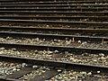 Tracks (216430373).jpeg