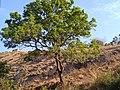 Tree&.jpg