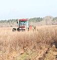 Tree-planting tractor (5660534883).jpg