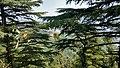 Tree View of mecleodganj.jpg