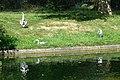 Trio of herons in Regents Park - geograph.org.uk - 1370445.jpg