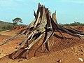 Tronco seco La Mochila.jpg