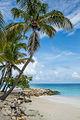 Tropical dream (15660236039).jpg